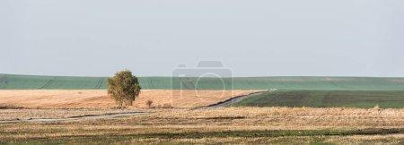 Photo pour Image horizontale de l'arbre vert dans le champ contre le ciel avec des nuages - image libre de droit