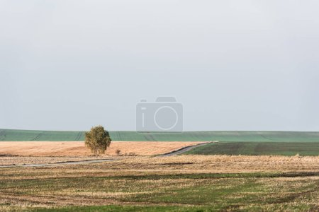Photo for Green tree in field against sky with clouds - Royalty Free Image