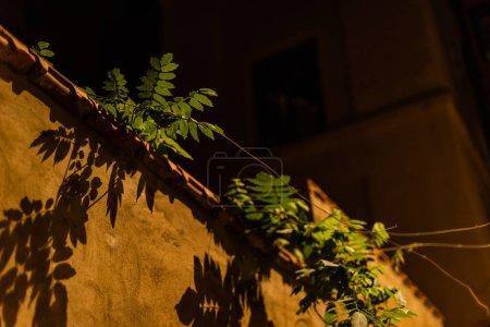 Photo pour Vue à angle bas des feuilles vertes et fraîches près du mur contre le ciel nocturne - image libre de droit
