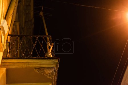 Photo for Low angle view of cute dog looking at camera on balcony at night - Royalty Free Image