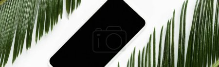 Photo for Top view of green palm leaves and smartphone isolated on white, panoramic shot - Royalty Free Image
