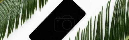 Photo pour Vue de dessus des feuilles de palmier vert et smartphone isolé sur blanc, panoramique - image libre de droit