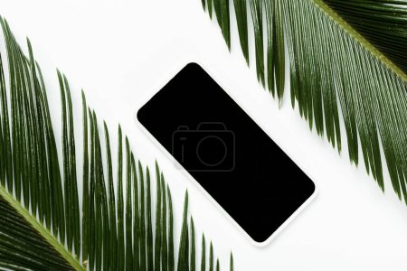 top view of green palm leaves and smartphone isolated on white