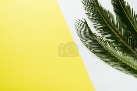 Photo for Top view of green palm leaves on white and yellow background - Royalty Free Image
