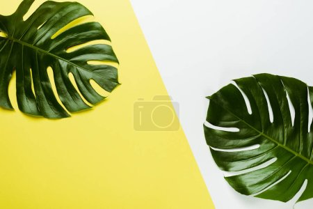 top view of green palm leaves on white and yellow background