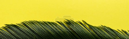 top view of green palm leaf isolated on yellow background, panoramic shot