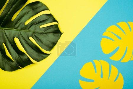 Photo pour Vue du dessus des feuilles de palmier jaune et vert naturel sur fond bleu - image libre de droit