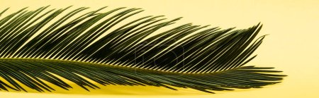 Photo for Green palm leaf on yellow background, panoramic shot - Royalty Free Image