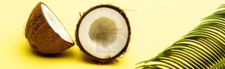 Photo for Delicious sweet coconut and palm leaf on yellow background, panoramic shot - Royalty Free Image