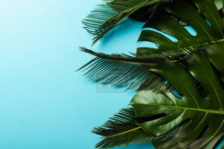 Photo for Top view of green palm leaves on blue background - Royalty Free Image