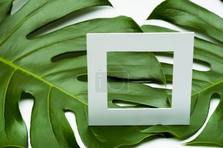 Photo for Square empty frame on green palm leaves on white background - Royalty Free Image