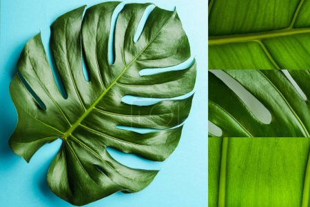 Photo for Collage of green palm leaves on blue background - Royalty Free Image
