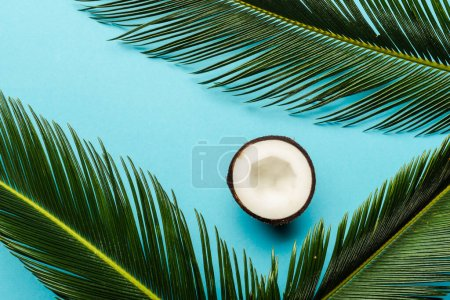 Photo for Top view of green palm leaves and coconut half on blue background - Royalty Free Image
