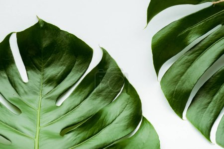 close up view of green palm leaves on white background