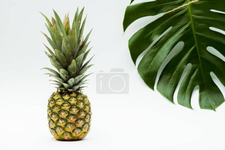 Photo for Green palm leaf and pineapple on white background - Royalty Free Image