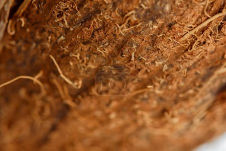 Photo for Close up view of coconut brown textured peel - Royalty Free Image