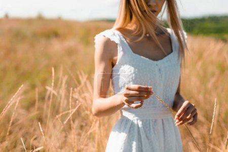 Photo pour Vue partielle de la jeune femme en robe blanche tenant épillets tout en se tenant dans la prairie herbeuse - image libre de droit