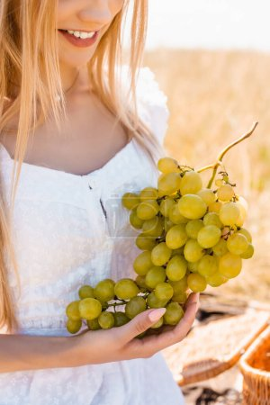 cropped view of young woman in white dress holding bunch of ripe grapes in field