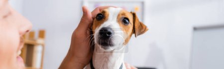 selective focus of businessman touching head of jack russell terrier dog, horizontal image