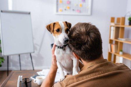 Photo pour Vue arrière de l'homme d'affaires tenant Jack blanc russell terrier chien avec des taches brunes sur la tête au bureau - image libre de droit