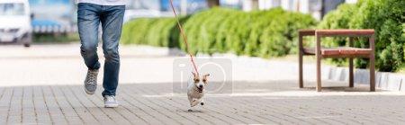 Photo pour Vue partielle de l'homme en jeans courant le long de la ruelle avec Jack Russell Terrier chien en laisse, image horizontale - image libre de droit