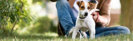 Photo pour Vue recadrée de l'homme assis sur la pelouse près de Jack blanc russell terrier chien avec des taches brunes sur la tête, vue panoramique - image libre de droit