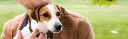 Photo pour Vue partielle de l'homme tenant un chien blanc Jack Russell Terrier avec des taches brunes sur la tête, concept panoramique - image libre de droit