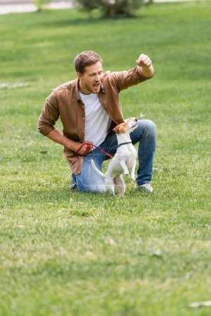 Photo for Young man in brown shirt and jeans training jack russell terrier dog on green grass in park - Royalty Free Image