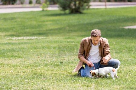 Photo pour Concentration sélective du jeune homme regardant Jack Russell terrier en laisse dans le parc - image libre de droit
