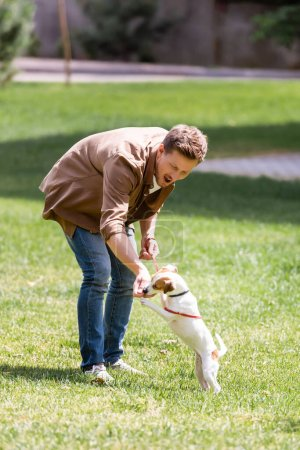 Photo for Selective focus of excited man playing with jack russell terrier on grass in park - Royalty Free Image