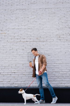 Photo pour Man in jeans holding disposable cup while walking on leash jack russell terrier near facade of building - image libre de droit