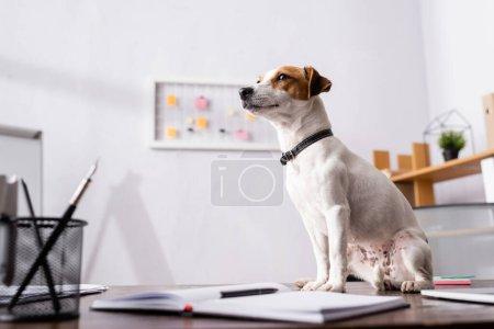 Enfoque selectivo de jack russell terrier mirando hacia otro lado junto a la papelería en la mesa de la oficina