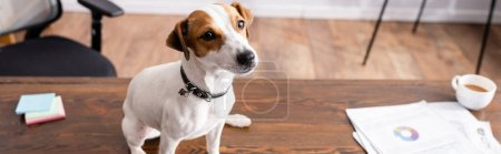 Photo pour Horizontal image of jack russell terrier sitting near cup of coffee and papers on office table - image libre de droit