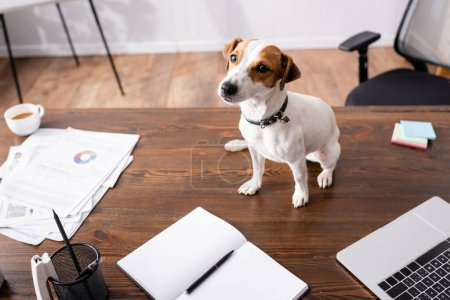 Photo for Selective focus of jack russell terrier sitting near laptop and stationery on table in office - Royalty Free Image