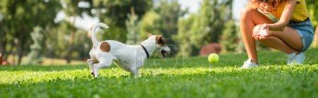 Photo pour Vue recadrée de la jeune femme jouant au ballon avec Jack Russell Terrier chien - image libre de droit