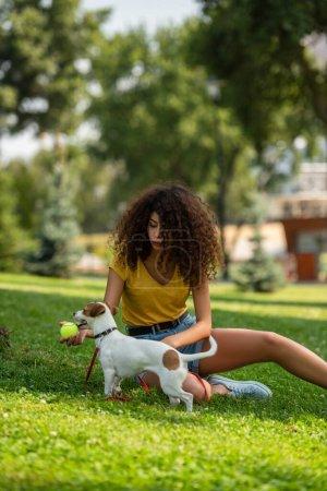 Photo pour Concentration sélective de la jeune femme tenant une balle de tennis et regardant chien - image libre de droit