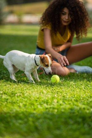Selektiver Blick einer jungen Frau auf Hund in der Nähe von Tennisball