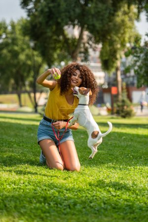 Photo for Selective focus of young woman holding tennis ball and looking at jumping dog - Royalty Free Image