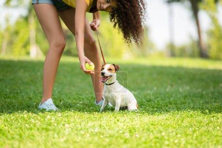 Photo pour Vue recadrée de la jeune femme tenant une balle de tennis et regardant chien - image libre de droit