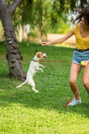 Photo pour Concentration sélective de la jeune femme et Jack Russell terrier chien jouer dans le parc - image libre de droit