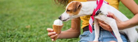 Photo pour Cropped view of young woman feeding jack russell terrier dog ice cream - image libre de droit