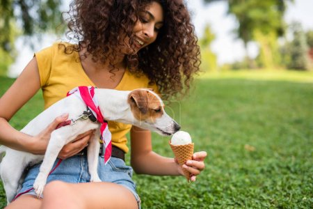 Photo pour Concentration sélective de jeune femme nourrissant Jack Russell terrier chien crème glacée - image libre de droit