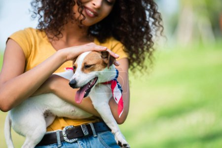cropped view of curly woman in summer outfit stroking jack russell terrier dog