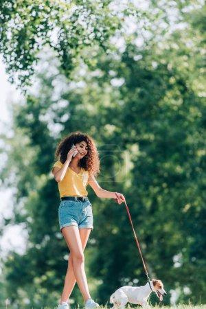 Photo pour Brunette, femme frisée en tenue d'été flânant avec Jack Russell terrier chien dans le parc et parlant sur smartphone - image libre de droit