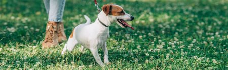 Website header of jack russell terrier standing near woman on grass with flowers