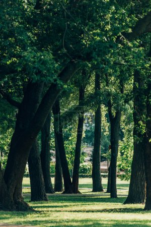 Photo for Selective focus of trees on meadow with green grass in summer park - Royalty Free Image