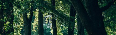 Photo for Panoramic shot of trees with green foliage in park - Royalty Free Image