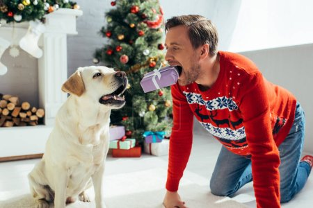 Photo pour Homme en pull tenant présent dans les dents près du labrador et décoré arbre de Noël - image libre de droit