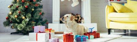 Photo pour Labrador couché près des cadeaux et arbre de Noël dans le salon décoré, bannière - image libre de droit