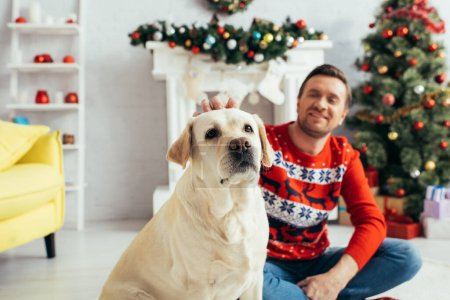 Labrador near man in sweater and christmas tree on blurred background